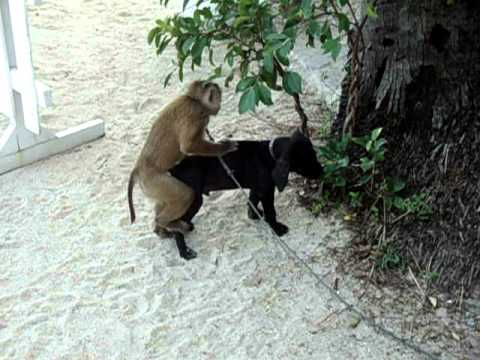 Girl and monkey sex video in you tube
